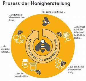 Warum Machen Bienen Honig : ber die honigbiene ~ Whattoseeinmadrid.com Haus und Dekorationen