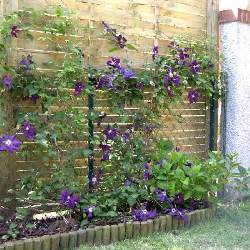 cl 233 matite italienne clematis viticella taille bouturage entretien