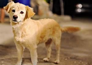 cute medium sized dogs