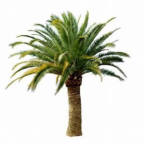 Lush Palm Tree #4248503, 1024x1024   All For Desktop