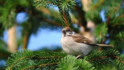 Sparrow Birds Trees