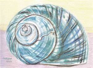 Drawn shell spiral shell - Pencil and in color drawn shell ...