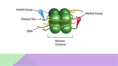 Modification Histone by Histone Modification The What How And Why