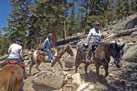 horse riding  high sierra uc davis extension equine