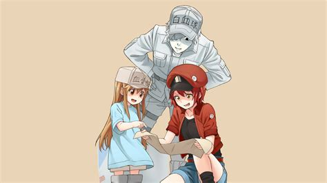 platelet red blood cell white blood cell cells  work