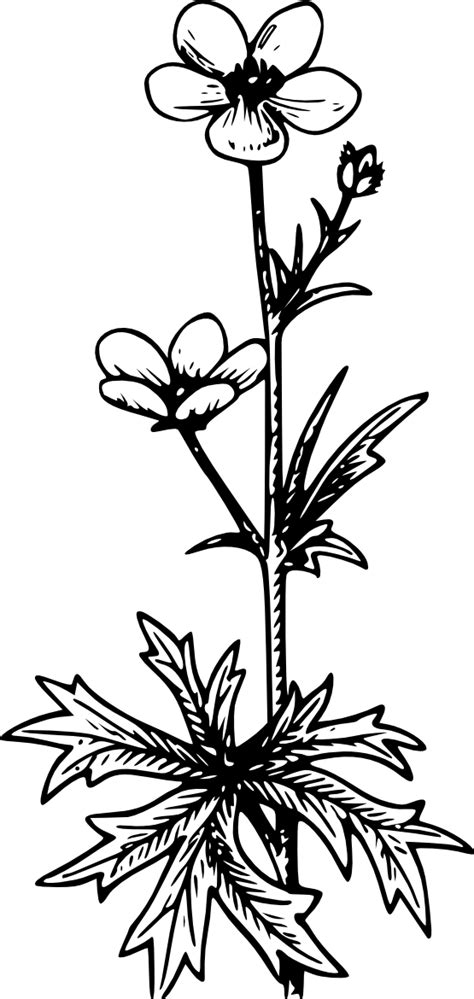 Free Buttercup Flower Tattoo, Download Free Clip Art, Free Clip Art on Clipart Library