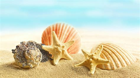Seashell Wallpapers For Desktop Weneedfun