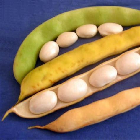 comment cuisiner le lieu jaune le coco de paimpol aop