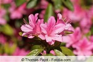Winterharte Pflanzen Liste : 85 winterharte immergr ne pflanzen liste und bersicht ~ Eleganceandgraceweddings.com Haus und Dekorationen