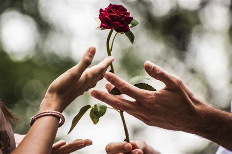 gender bender aramis perfume calligraphy rose