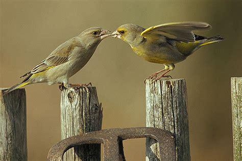 Vogelwelt Im Eigenen Garten Kleiber by M 228 Rkische Naturfotos Vogelwelt Winterv 246 Gel 1