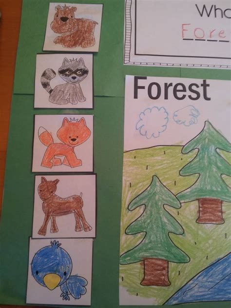 best 25 forest habitat ideas on 310   204d3eef1ae756617c166f187ac7e947 forest animal crafts forest animals