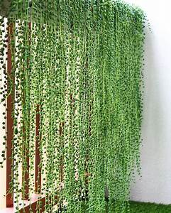 Best, Privacy, Fence, I, Ever, Seen, Ud83d, Udc4c, Ud83c, Udffd, Ud83d, Udc4c, Ud83c, Udffd, Repost, Plant, Pets, U30fb, U30fb, U30fb, Wall, Of, Pearls, As, Balcony, Pr