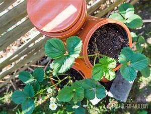 Erdbeeren Im Rohr Bauanleitung : erdbeerturm selber bauen in nur 4 schritten zur diy erdbeers ule ~ Orissabook.com Haus und Dekorationen