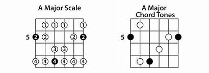 Chord Tones Guitar Tips Scales Intervals Major