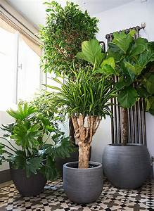 Plante D Intérieur Haute : plantes d 39 appartement schilliger ~ Premium-room.com Idées de Décoration