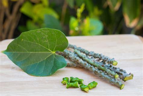 manfaat tanaman brotowali rematik obat nyeri sendi