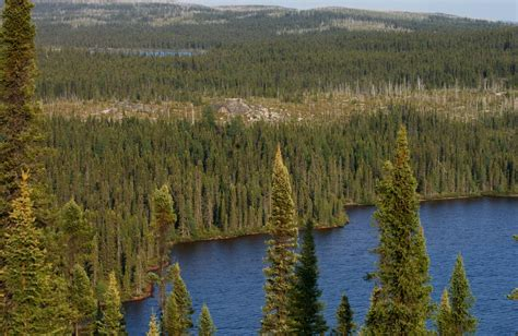 Boreal Forests Challenged By Global Change