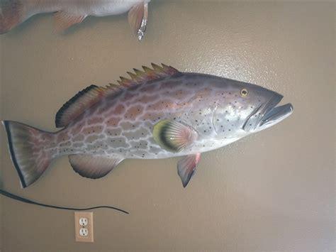 grouper yellowfin fish mount