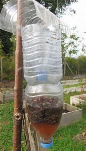 Piege A Frelon : le frelon asiatique ~ Farleysfitness.com Idées de Décoration