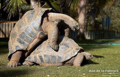 The Order Seasons tortue geante daldabra zoo de la palmyre 1200 x 778 · jpeg