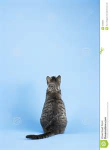 cat back back view of cat stock image image 2045681