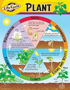 44 Best Hs Plant Life Cycle Images On Pinterest