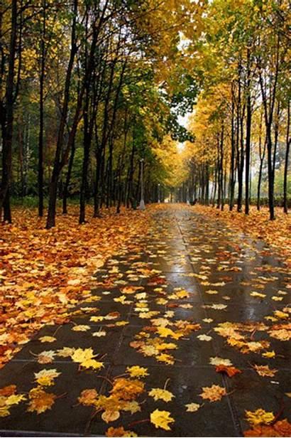 Blowing Wind Leaves Autumn Fall Animated Season