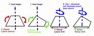 What Shape Is Your Horses U0026 39 S Hoof  Do You Know What To Look