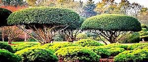 Heimische Pflanzen Für Den Garten : japanische b ume pflanzen online kaufen luxurytrees shop ~ Michelbontemps.com Haus und Dekorationen