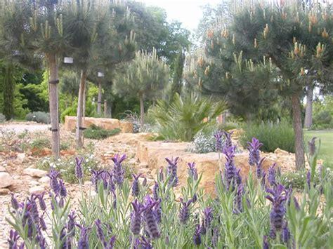 meditteranean plants mediterranean plants in uk my climate change garden