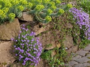 Asche Gut Für Pflanzen : pflanzen f r steingarten 7 pflegeleichte vorschl ge garten gartenarbeit zenideen ~ Markanthonyermac.com Haus und Dekorationen