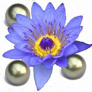 Le Lotus Bleu Levallois : le blog de theoliane des perles de mai ~ Gottalentnigeria.com Avis de Voitures