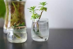 Bouture Plante Verte : les petites boutures dans l 39 eau strawberries ~ Melissatoandfro.com Idées de Décoration