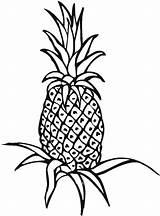 Pineapple Coloring Plant Drawing Outline Clipart Field Line Unripe Printable Clipartmag Panda sketch template