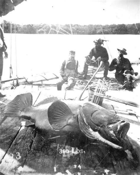 florida goliath grouper jupiter fishermen inlet fishing 1910 fl fish west commons history memory definition meaning 1910s key three wikimedia