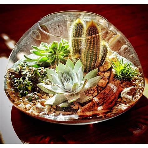 ไอเดียการจัดตกแต่ง - Cactus House