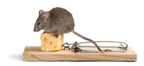will keeping lights on keep mice away 10 ways to keep the mouse out of your house dc