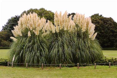 Best 25+ Pampas Grass Ideas On Pinterest