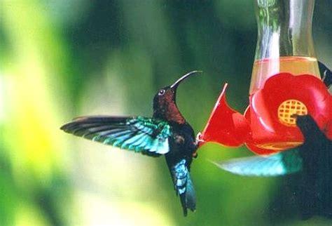 oiseaux le diaporama des beaux oiseaux