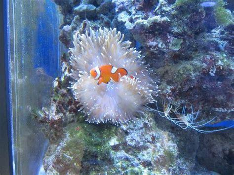 poissons d eau sal 233 e picture of aquarium du city tripadvisor