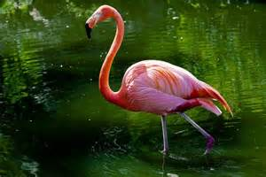 Florida Bird Flamingo