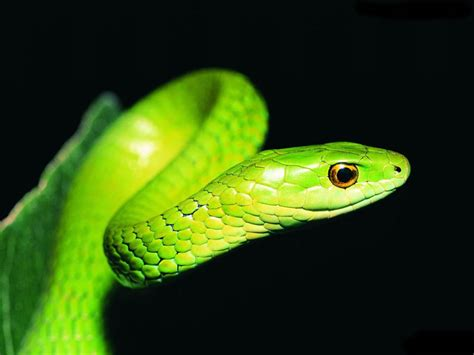 have fun: MOST DANGEROUS SNAKES