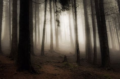 eerie forest wallpaper hd fantasy dead forest dark