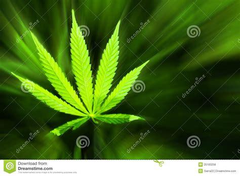 marijuana background stock photo image  grass illegal