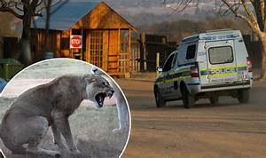 FIRST PICS: Woman, 29, mauled to death by lion at safari ...