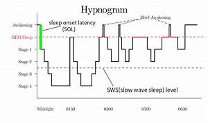 Rapid Eye Movement Sleep