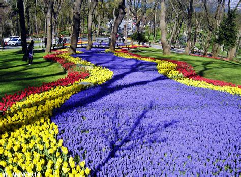 istanbul tulip festival in emirgan esans hotel istanbul old city event and news traditional hotel sultanahmet old city istanbul