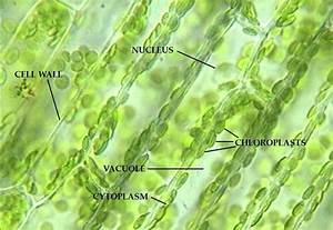 The Cells And Microorganisms Webquest