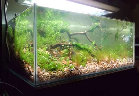the soil substrate or dirted planted tank a how to guide uk aquatic plant society
